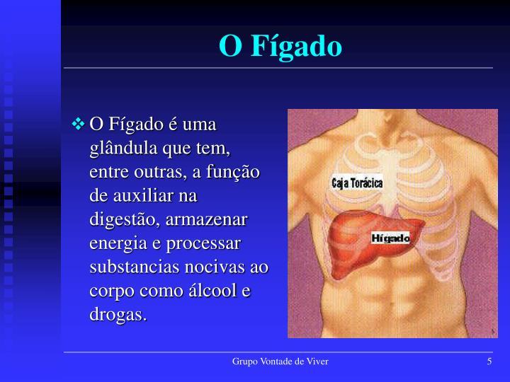 O Fígado