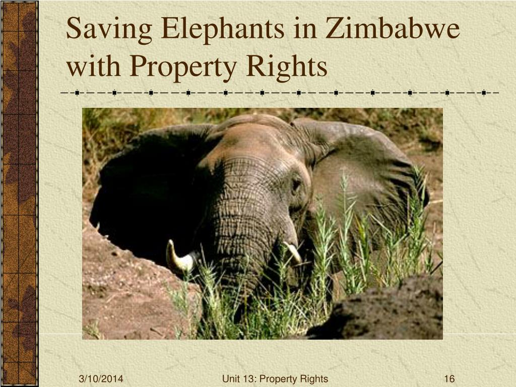 Saving Elephants in Zimbabwe with Property Rights