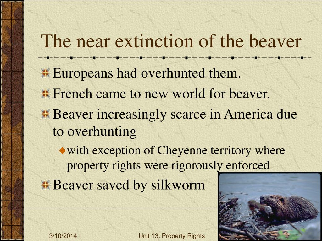 The near extinction of the beaver