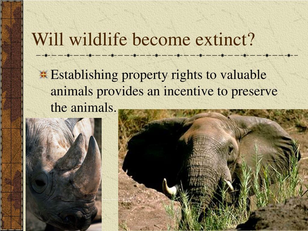 Will wildlife become extinct?