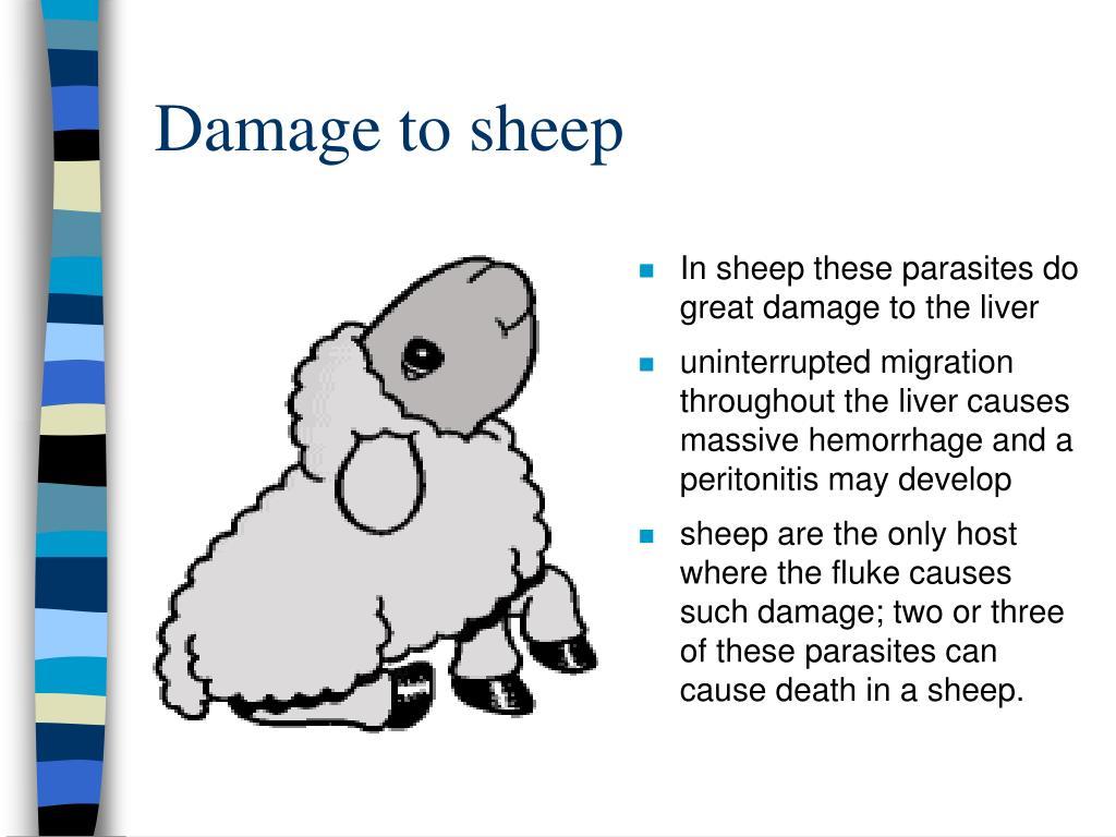 Damage to sheep