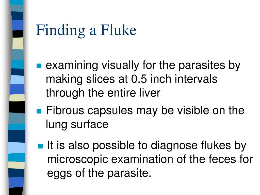 It is also possible to diagnose flukes by    microscopic examination of the feces for  eggs of the parasite.