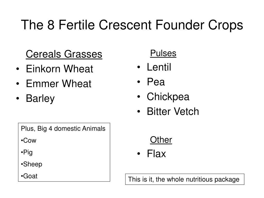 Cereals Grasses
