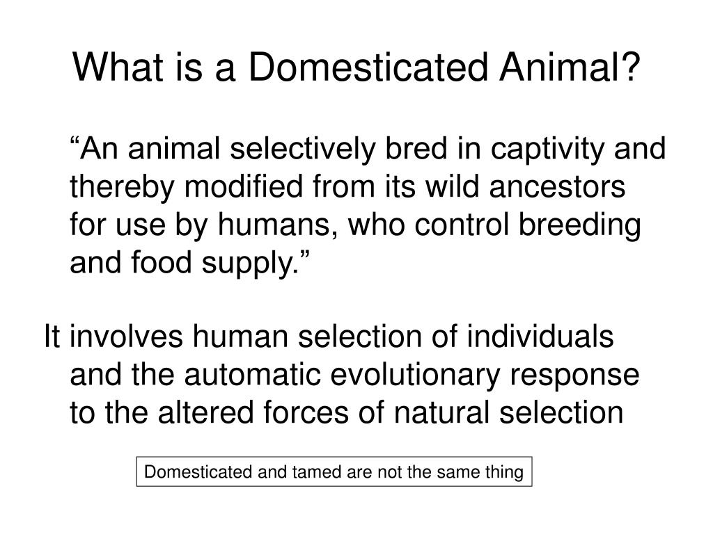 What is a Domesticated Animal?
