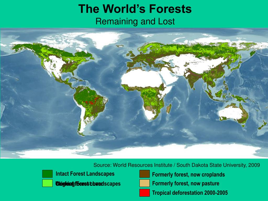 The World's Forests