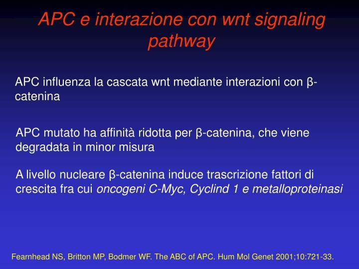 APC e interazione con wnt signaling pathway