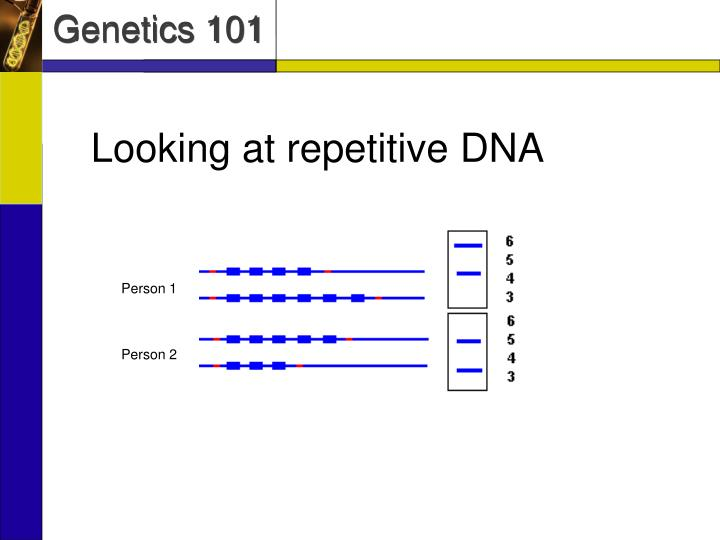 Looking at repetitive DNA