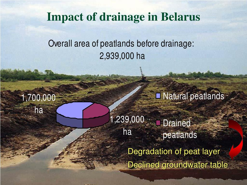 Impact of drainage in Belarus