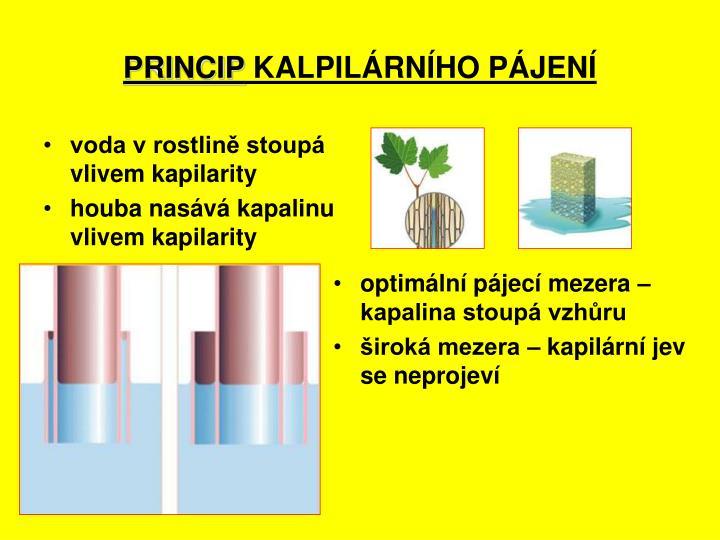 voda v rostlině stoupá vlivem kapilarity