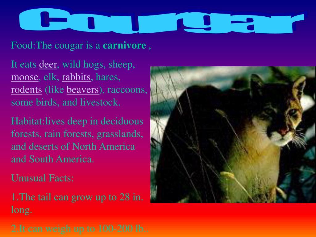 Courgar