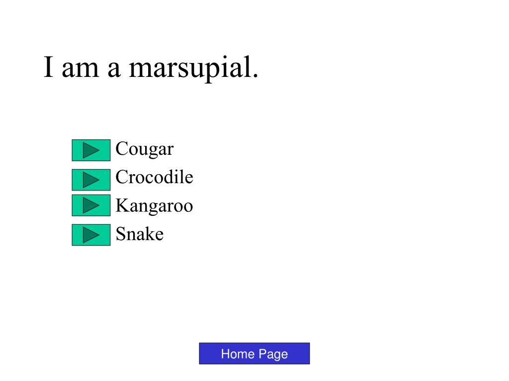 I am a marsupial.