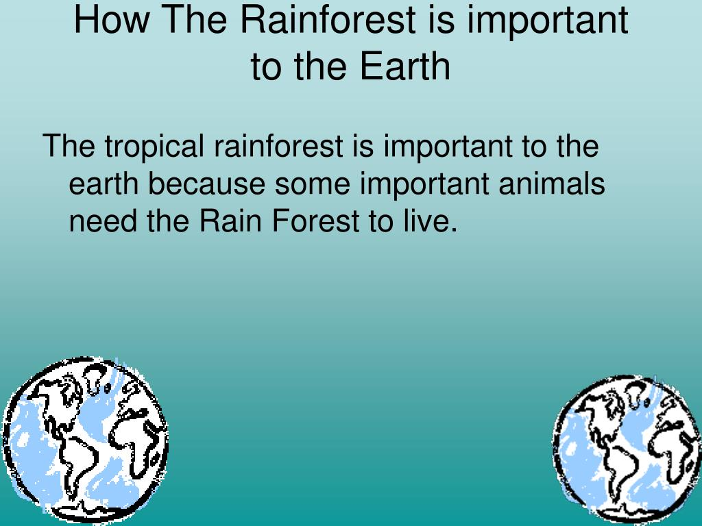 How The Rainforest is important