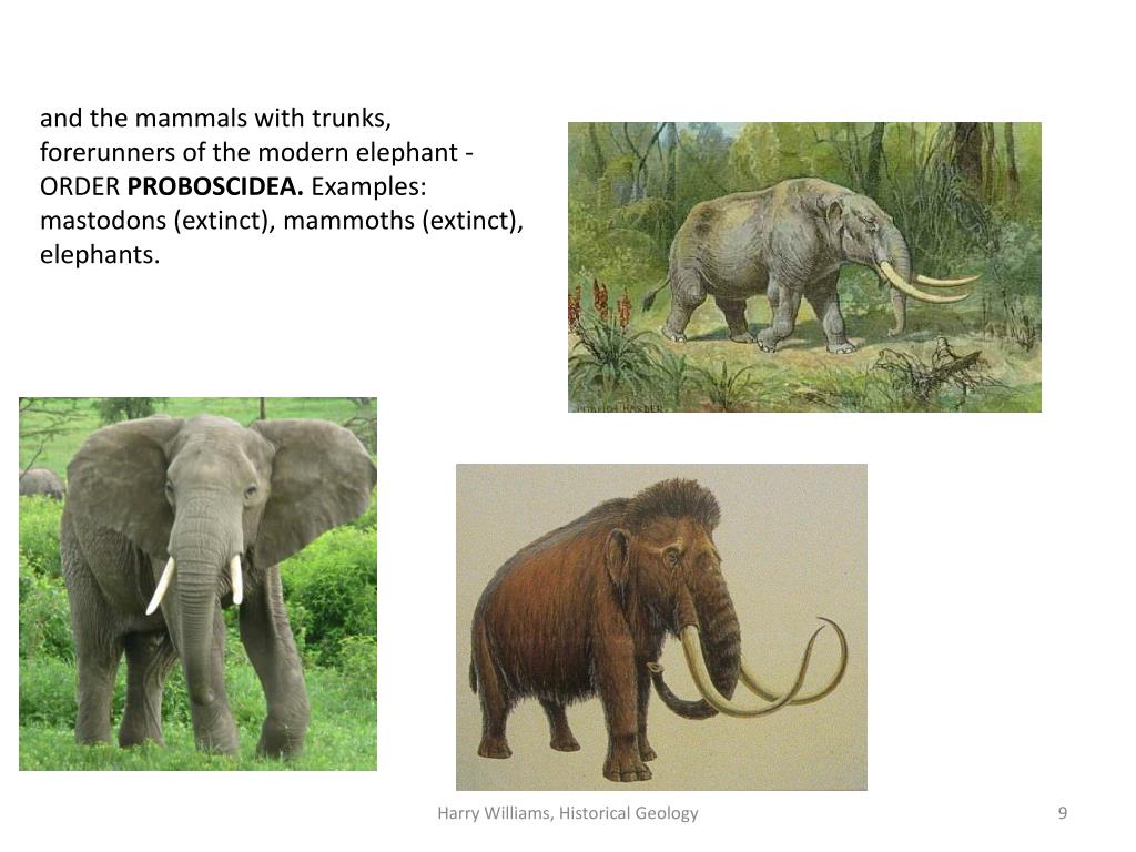 and the mammals with trunks, forerunners of the modern elephant -ORDER