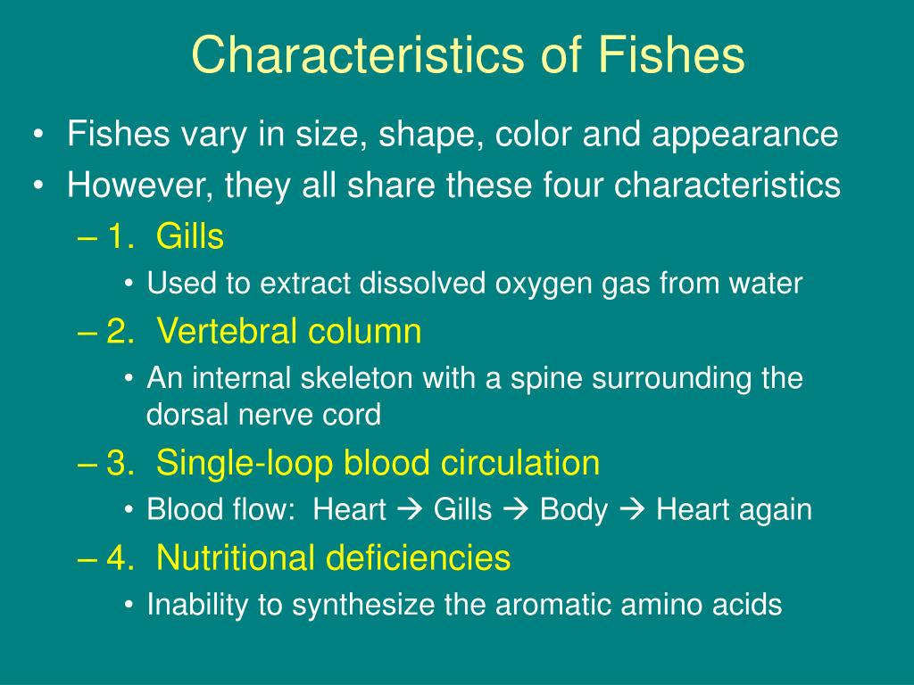 Characteristics of Fishes