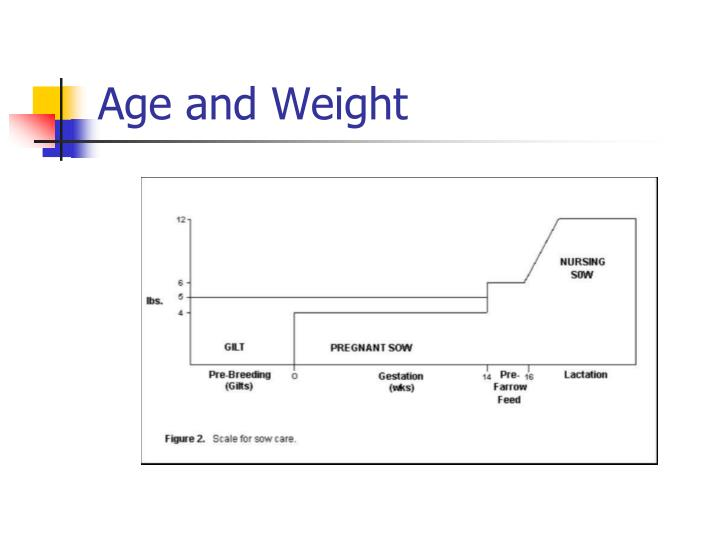 Age and Weight