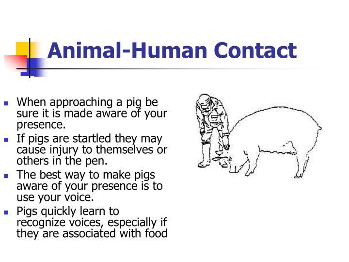 Animal-Human Contact