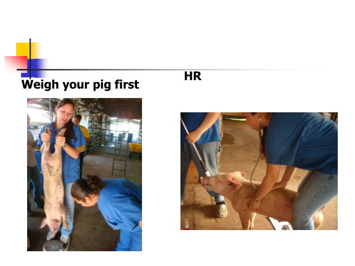 Weigh your pig first