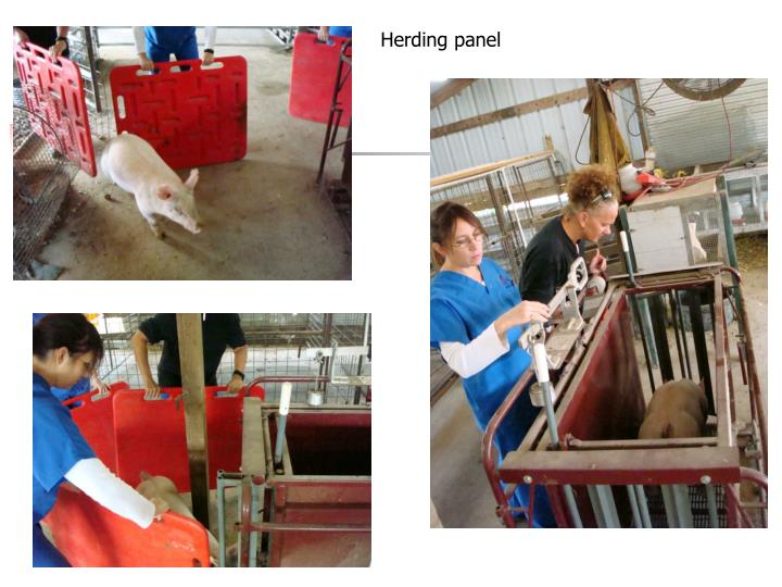 Herding panel