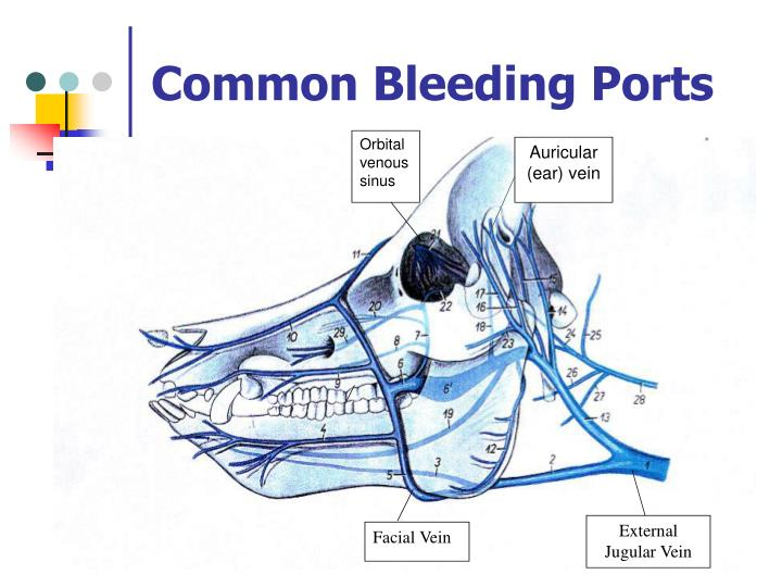 Common Bleeding Ports