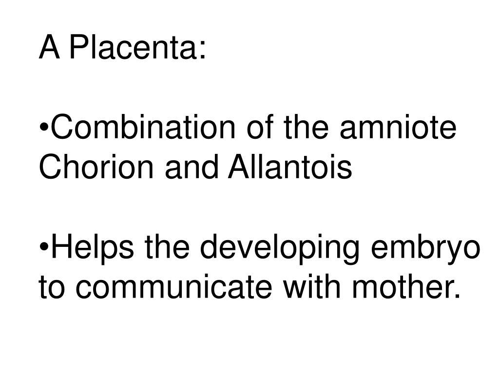 A Placenta: