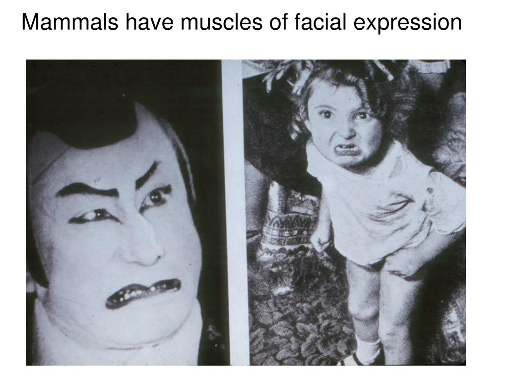 Mammals have muscles of facial expression