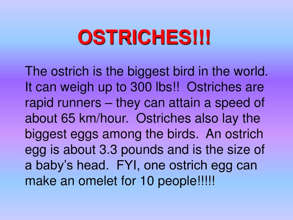 OSTRICHES!!!