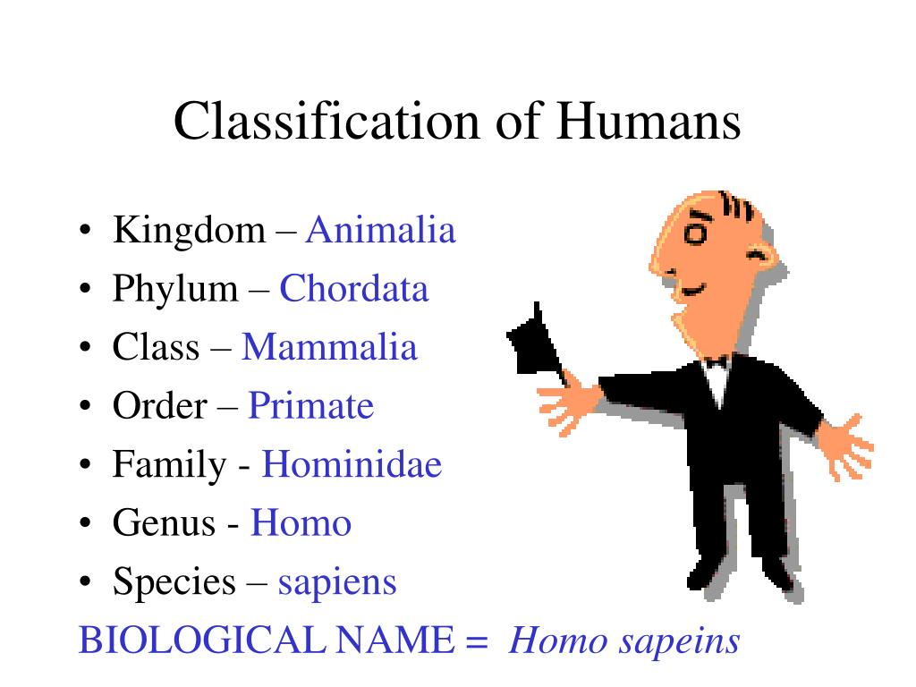 Classification of Humans