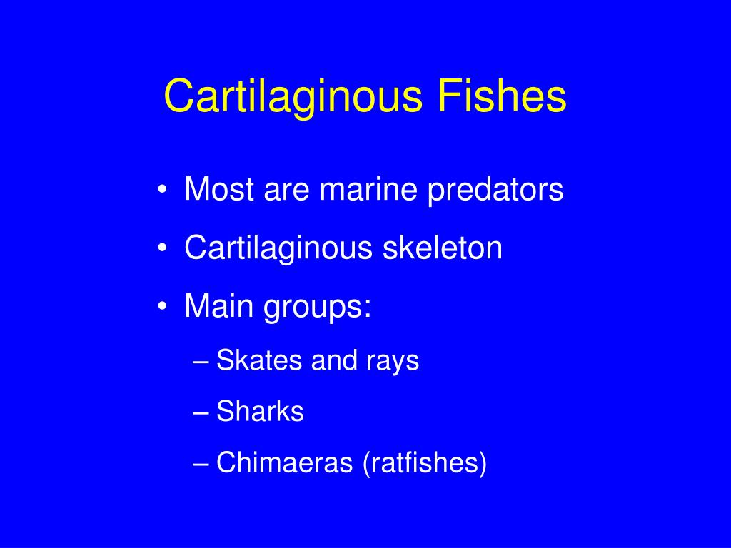 Cartilaginous Fishes