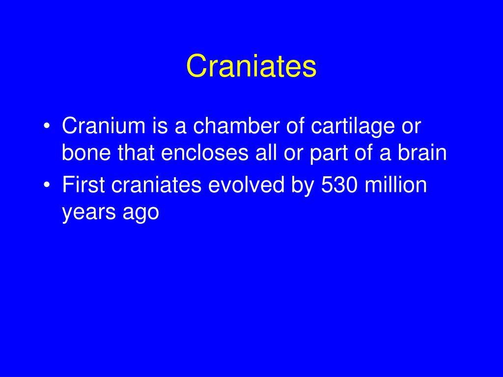 Craniates