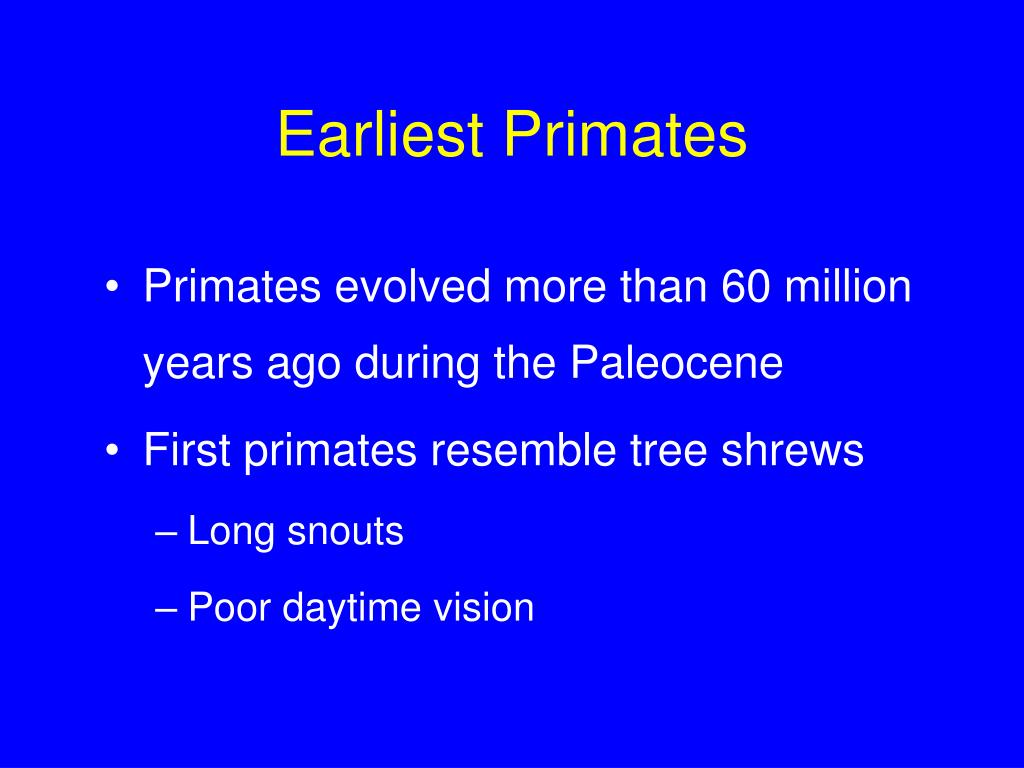 Earliest Primates