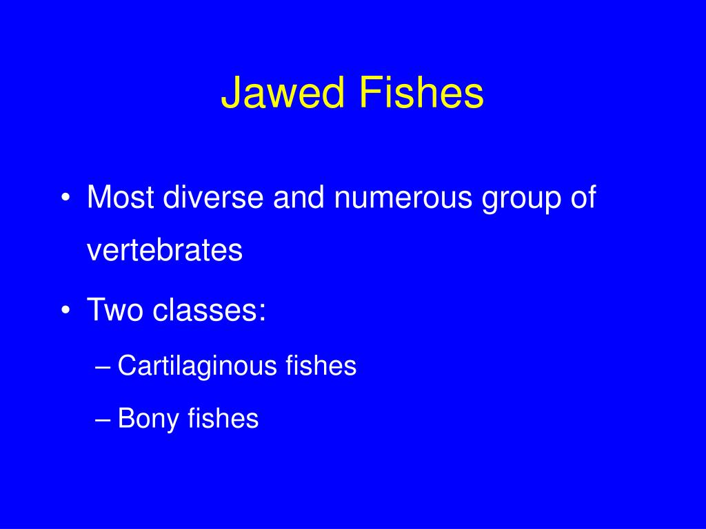 Jawed Fishes