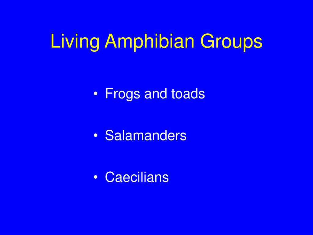 Living Amphibian Groups