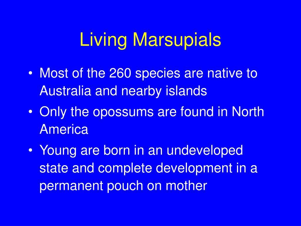 Living Marsupials