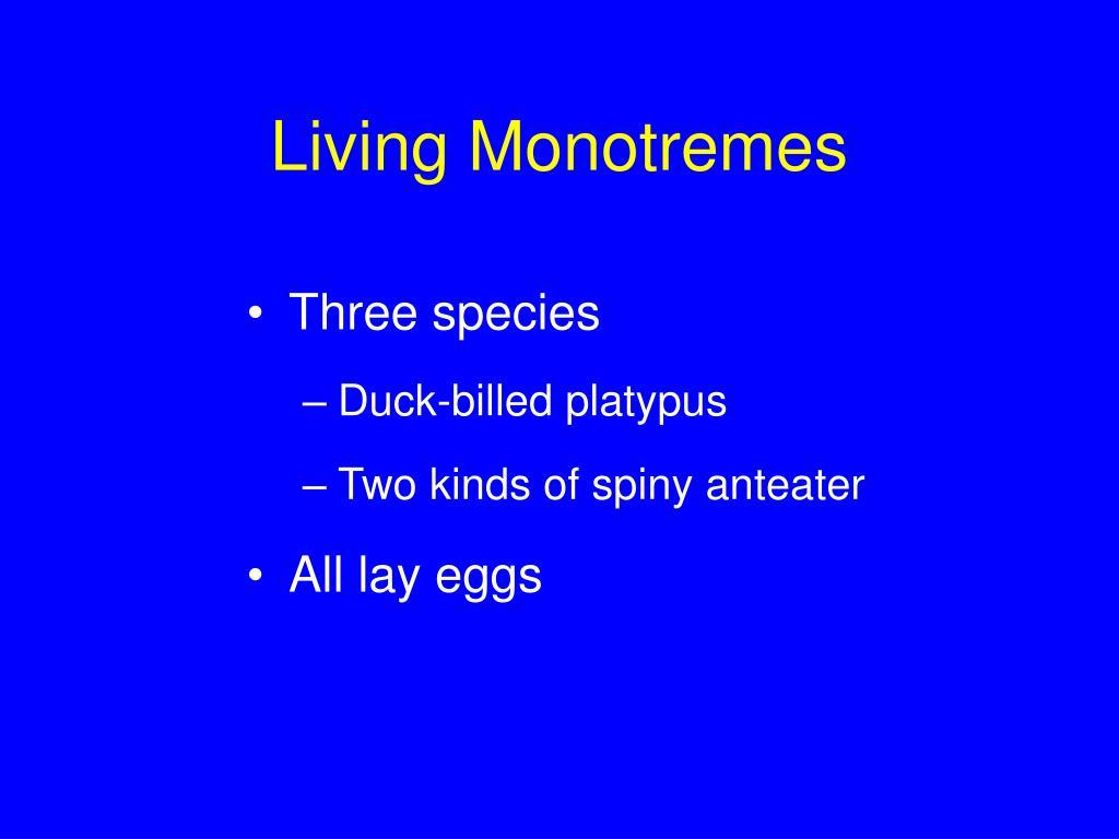 Living Monotremes