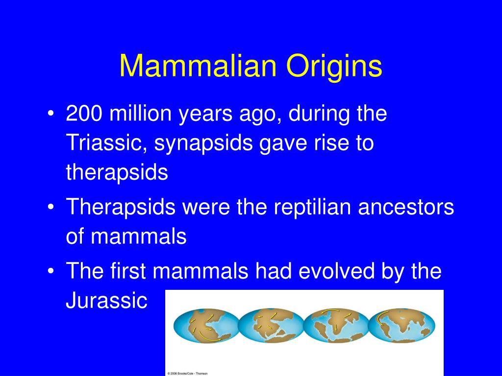 Mammalian Origins