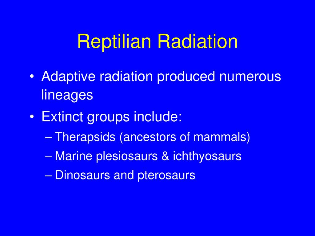 Reptilian Radiation
