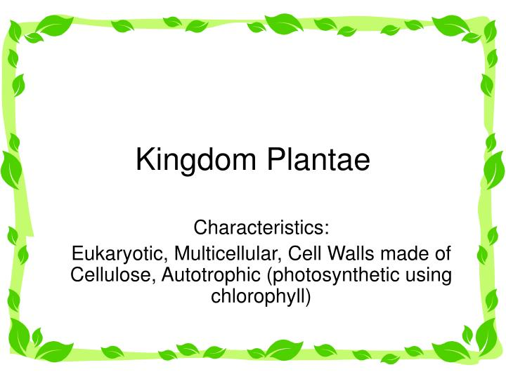Plantae Kingdom Cell | Free