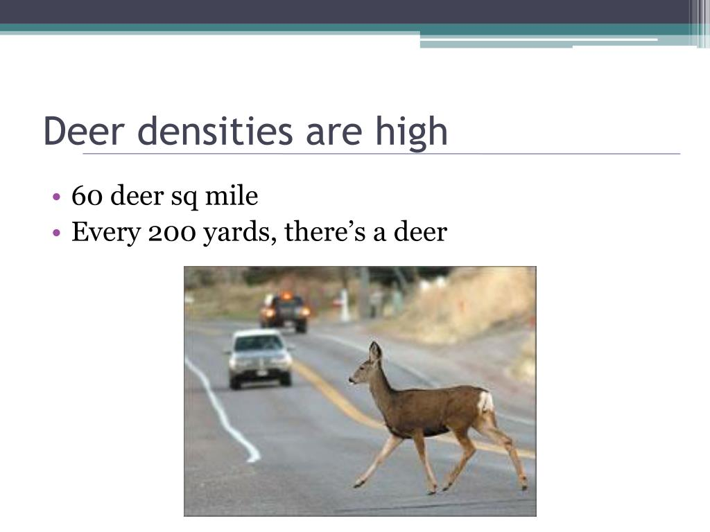 Deer densities are high