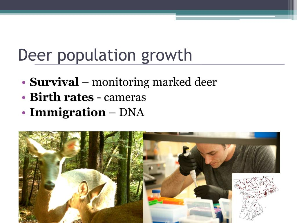 Deer population growth