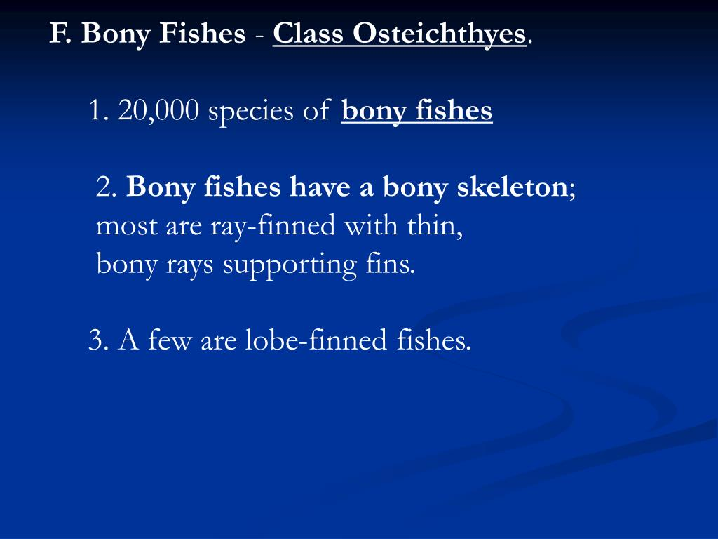 F. Bony Fishes