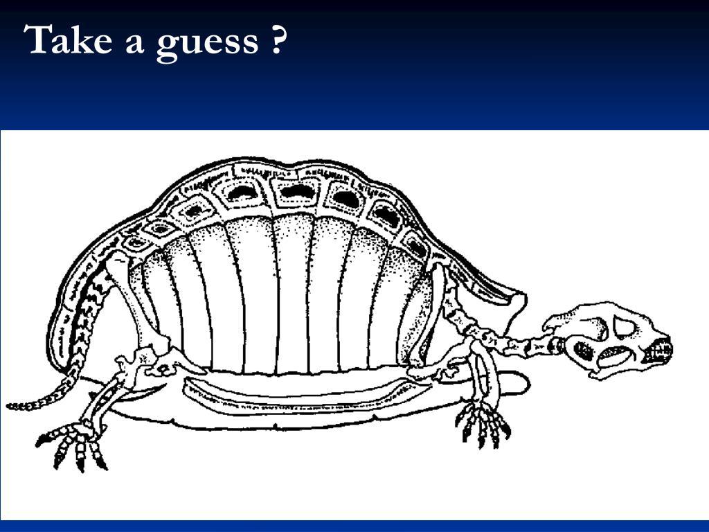 Take a guess ?