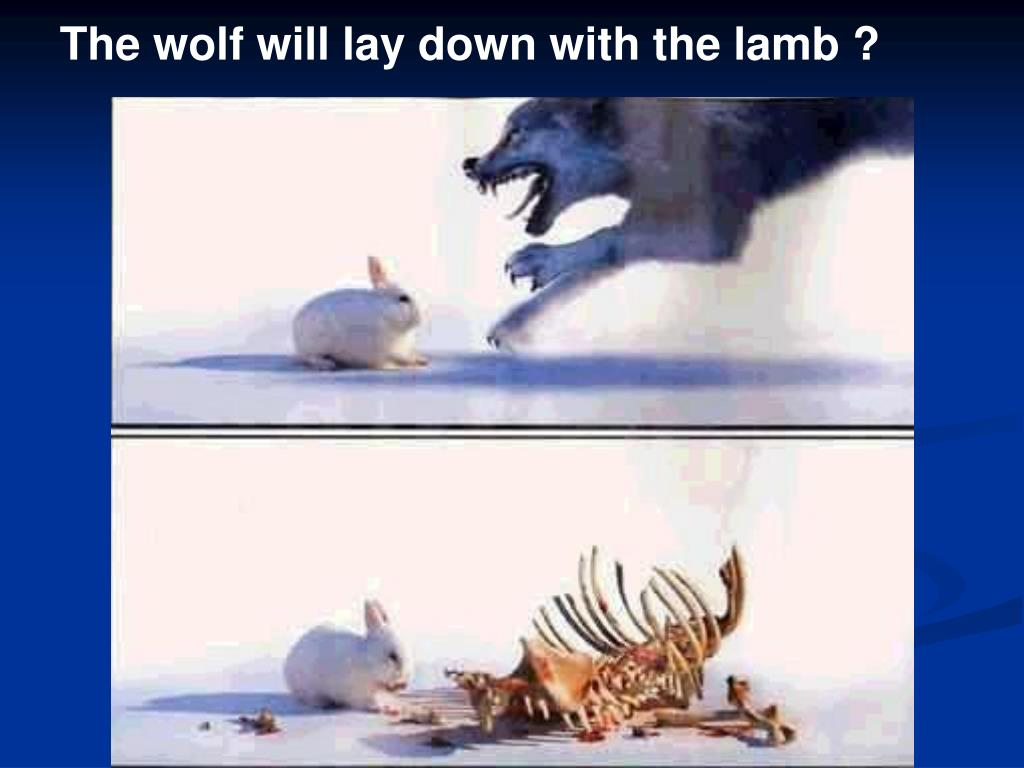 The wolf will lay down with the lamb ?