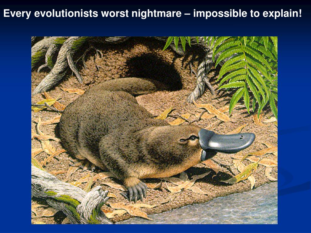 Every evolutionists worst nightmare – impossible to explain!