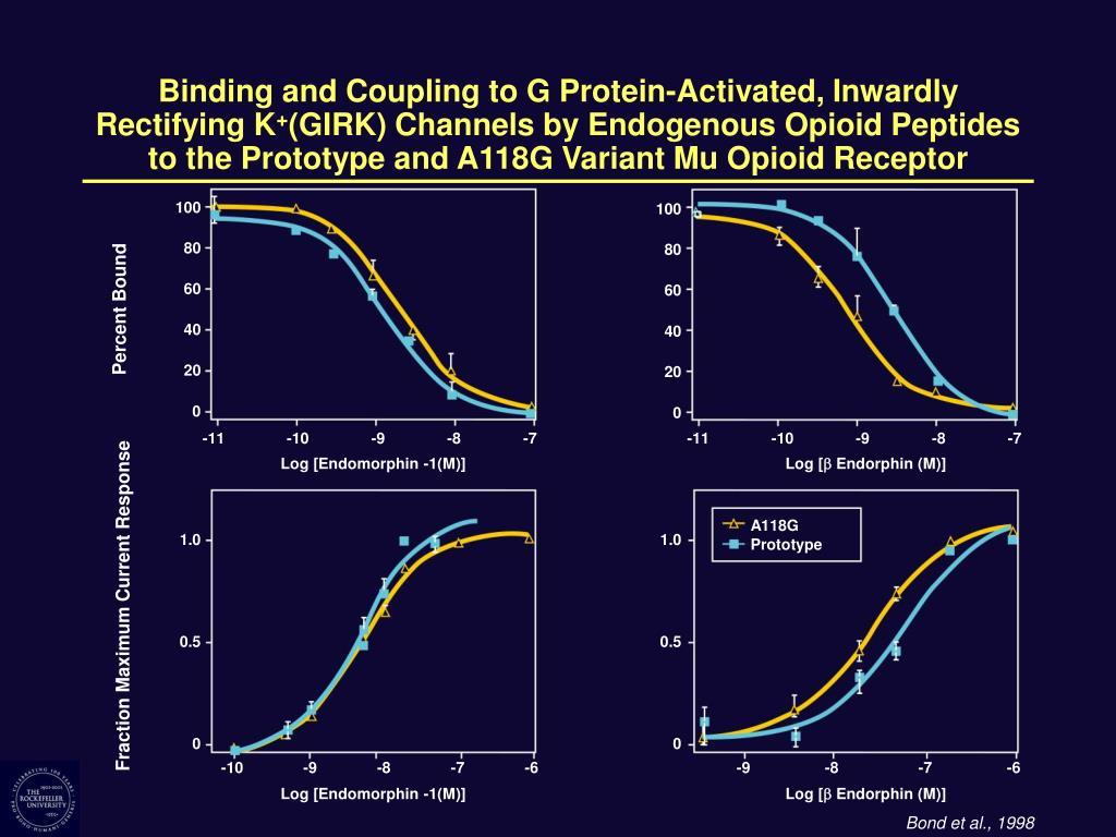 Binding and Coupling to G Protein-Activated, Inwardly
