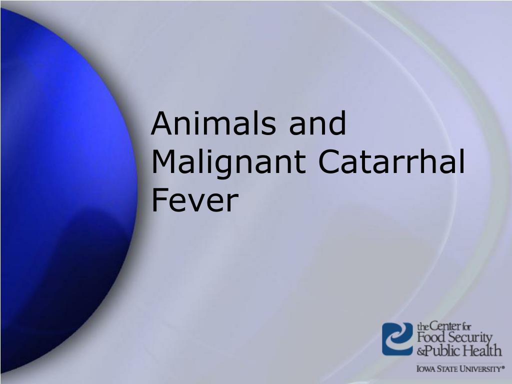 Animals and Malignant Catarrhal Fever