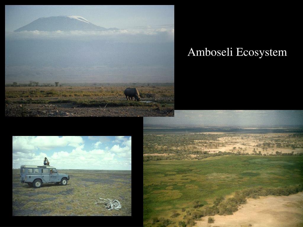 Amboseli Ecosystem