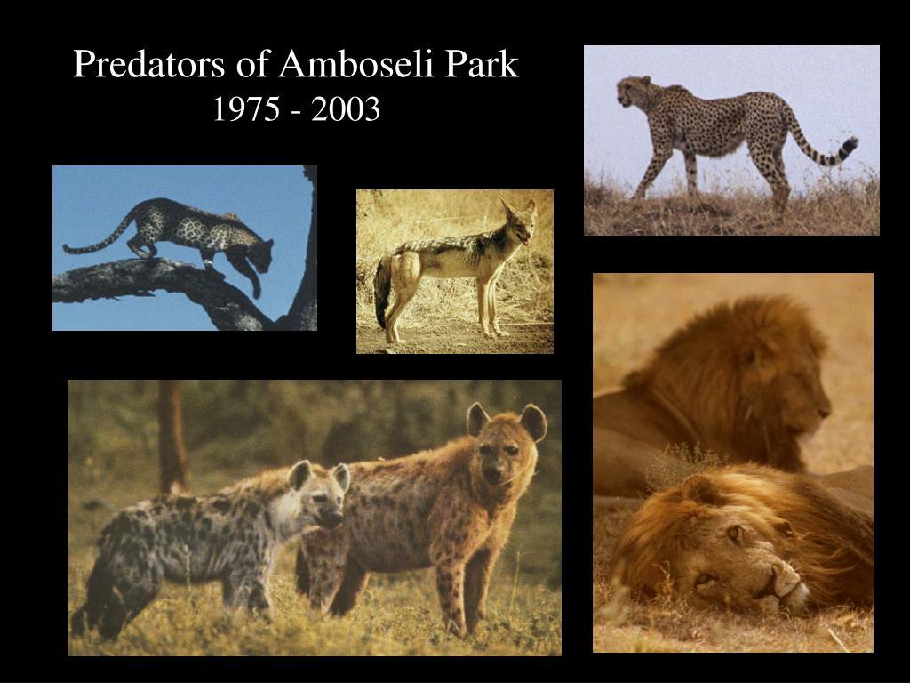Predators of Amboseli Park
