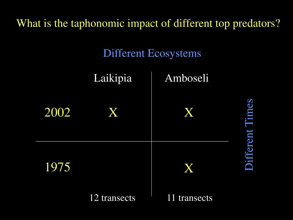 What is the taphonomic impact of different top predators?