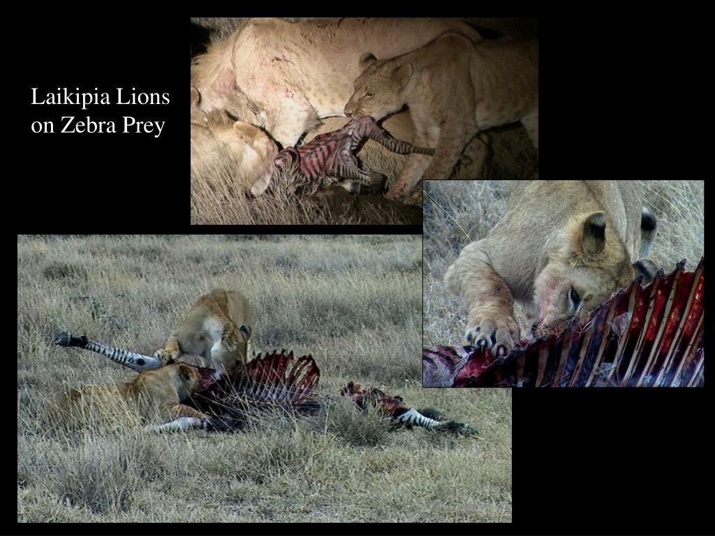 Laikipia Lions