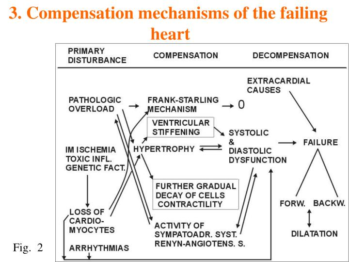 3. Compensation mechanisms of the failing